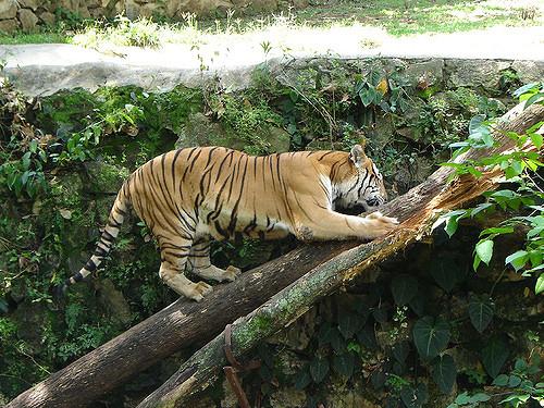 City Tour Y Zoologico De Cali Oliverio Tours